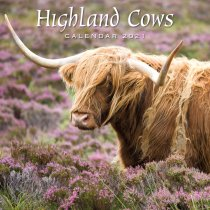 2021 Calendar Highland Cows (2 for £6v) (Mar)